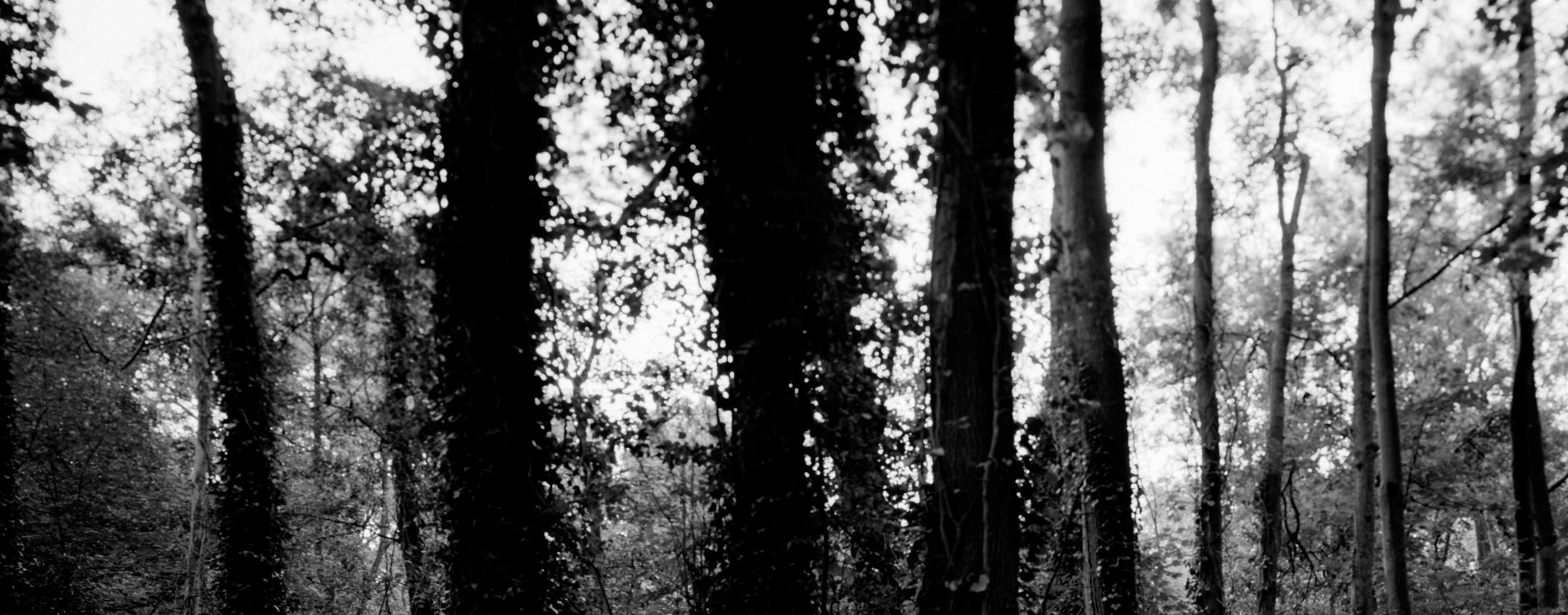 Header Shock Forest